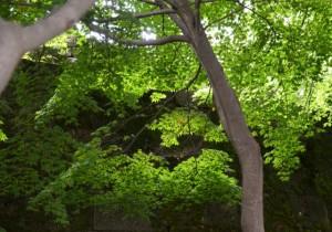 木立に差し込む日差